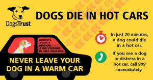 Dogs Trust DDIHC infographic
